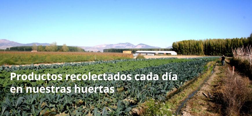 Productos ecológicos de huerta